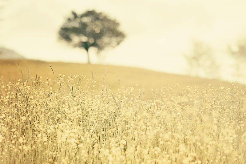 La Paz empieza conmigo, reflexión de Louise Hay